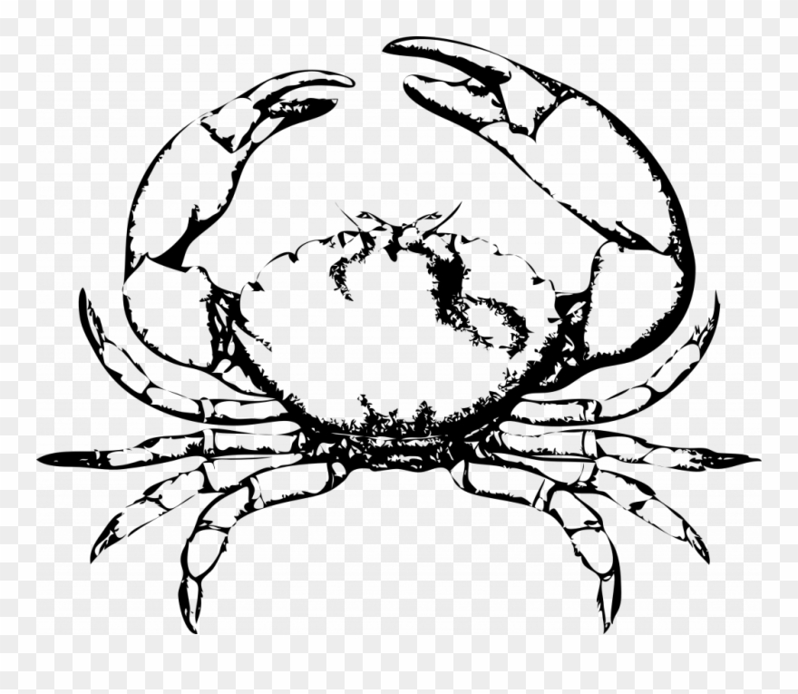 Energy drawings of crabs. Crab clipart crab drawing