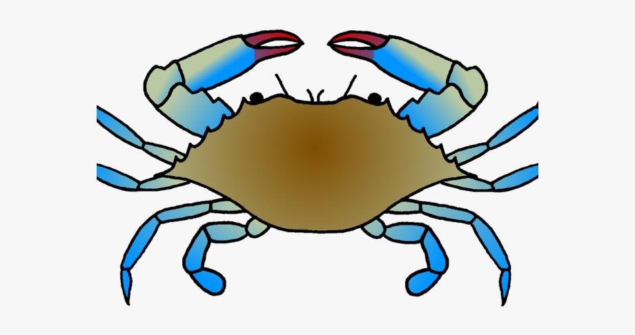 Crab clipart crab drawing. Marina blue easy