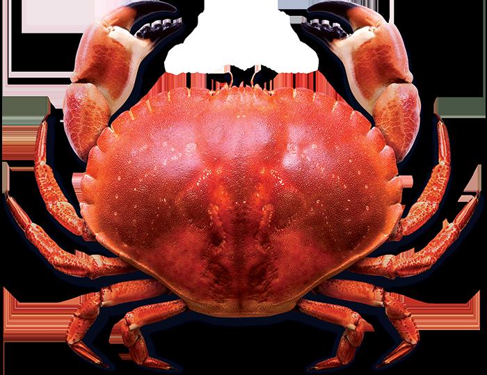 Pic animaxwallpaper com blue. Crab clipart crab feast