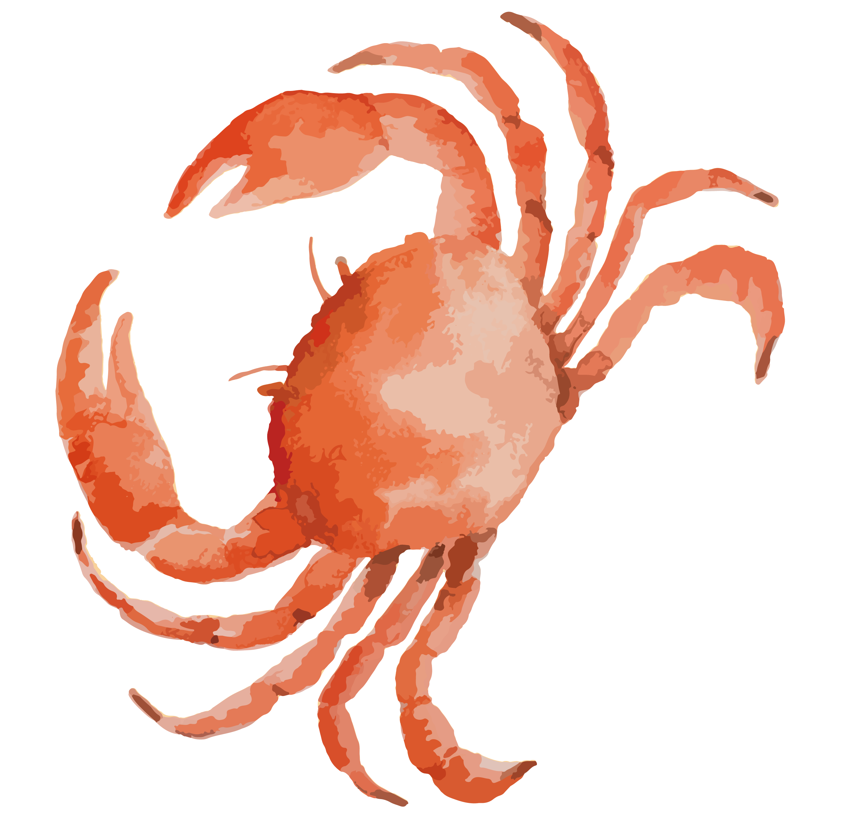 Crabs clipart crab claw. Dungeness drawing at getdrawings