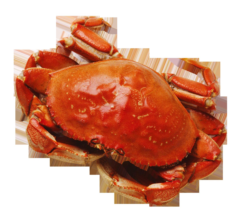 Png image purepng free. Crab clipart crab food