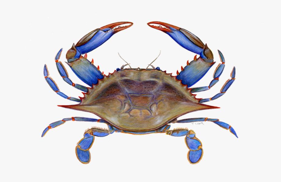 Blue clip art free. Crab clipart crab maryland