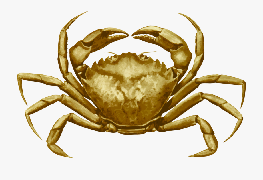 Crab clipart dungeness crab. Freshwater european green