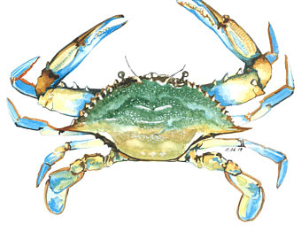Watercolor etsy . Crab clipart ghost crab