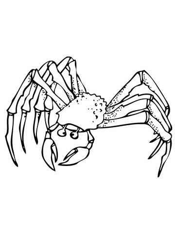 Coloring page free printable. Crab clipart ghost crab