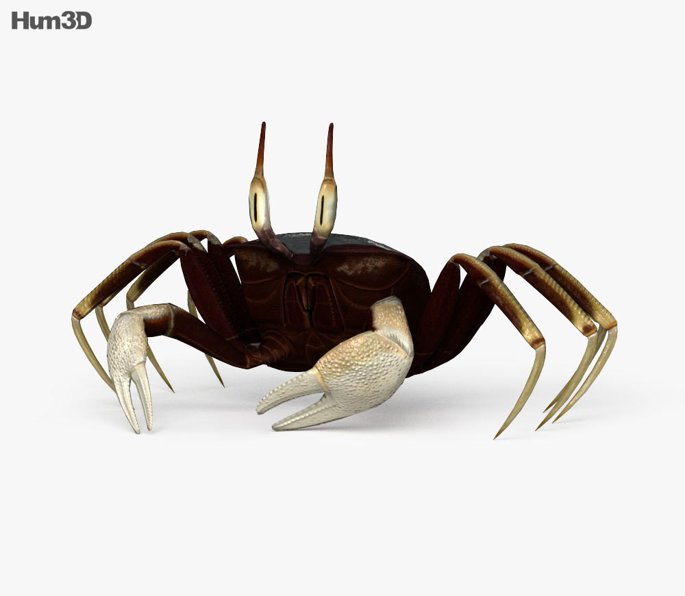 Crab clipart ghost crab. Horned hd d model