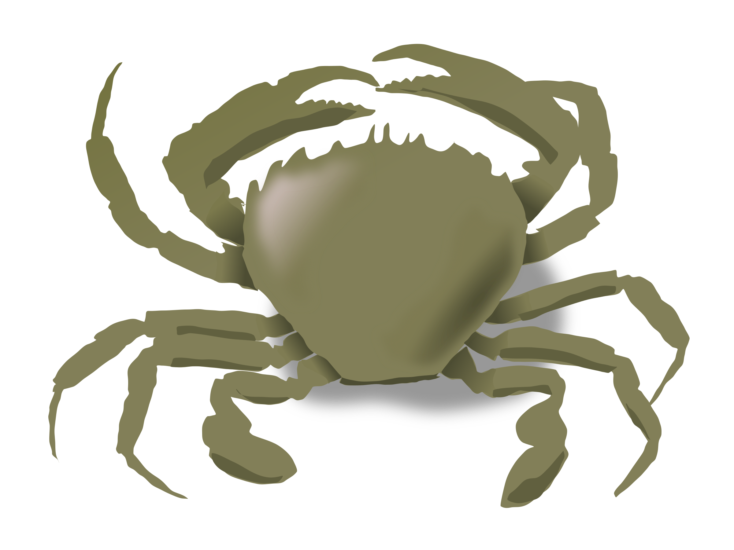 Water frames illustrations hd. Crabs clipart chilli crab