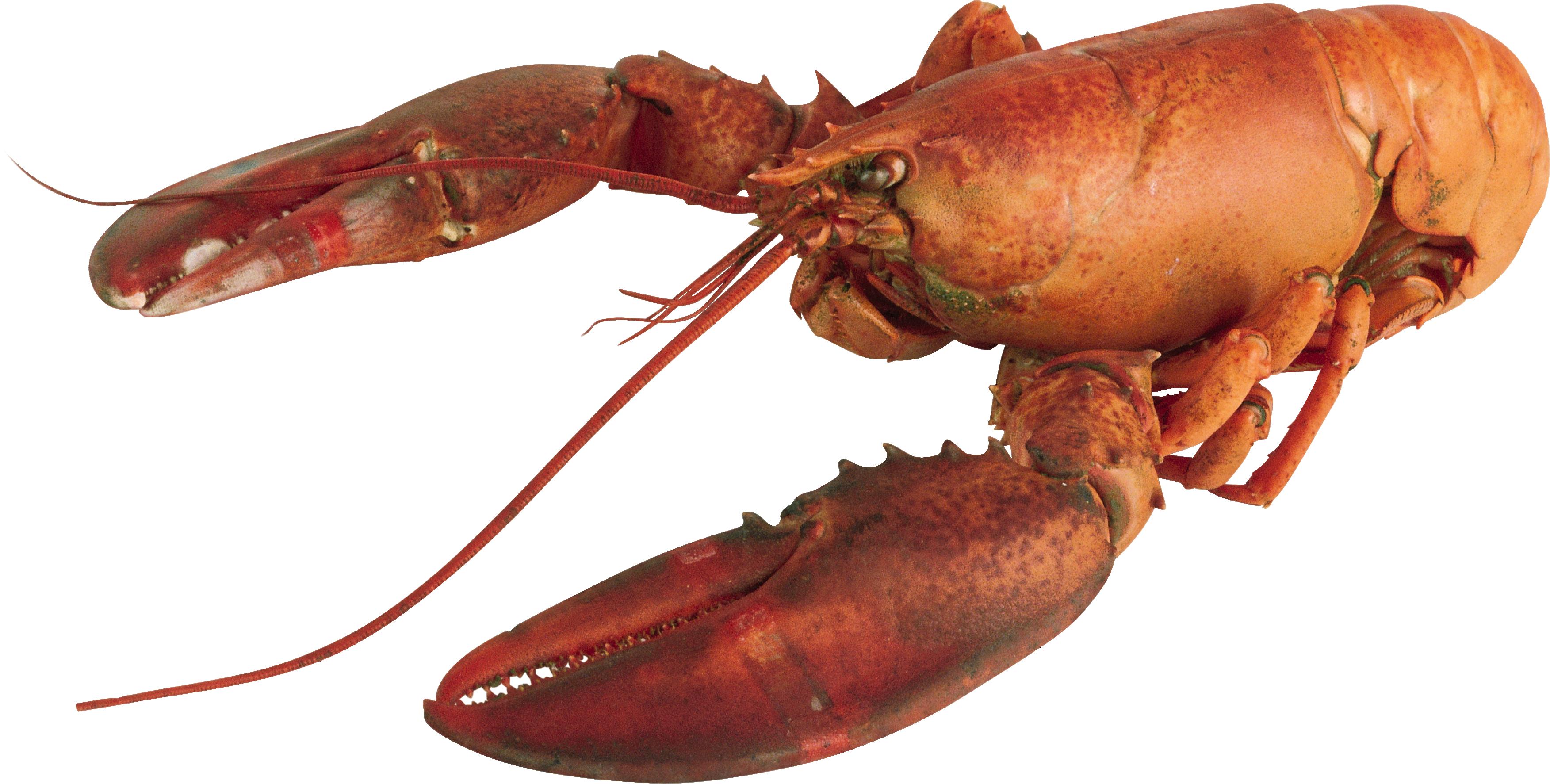 Transparent png file web. Lobster clipart lobster dish
