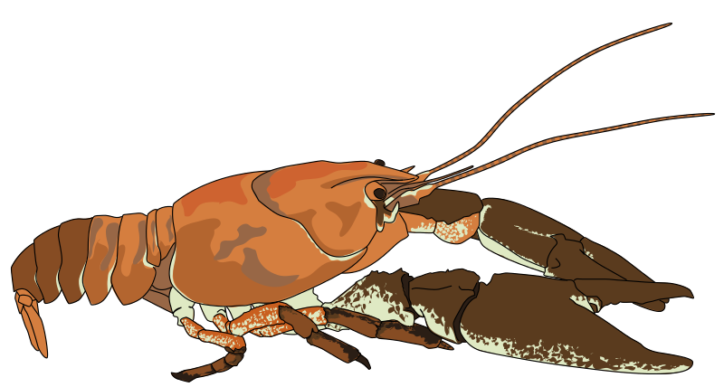 Crustaceans pencil and in. Crawfish clipart cajun music