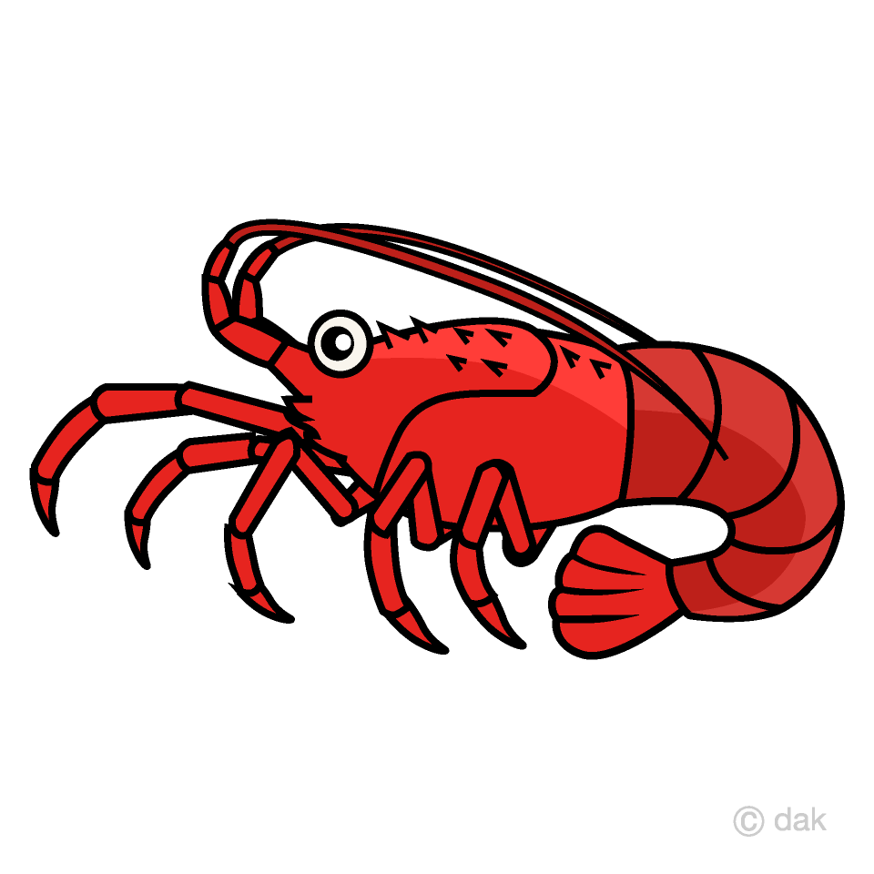Spiny lobster free picture. Crabs clipart red whale