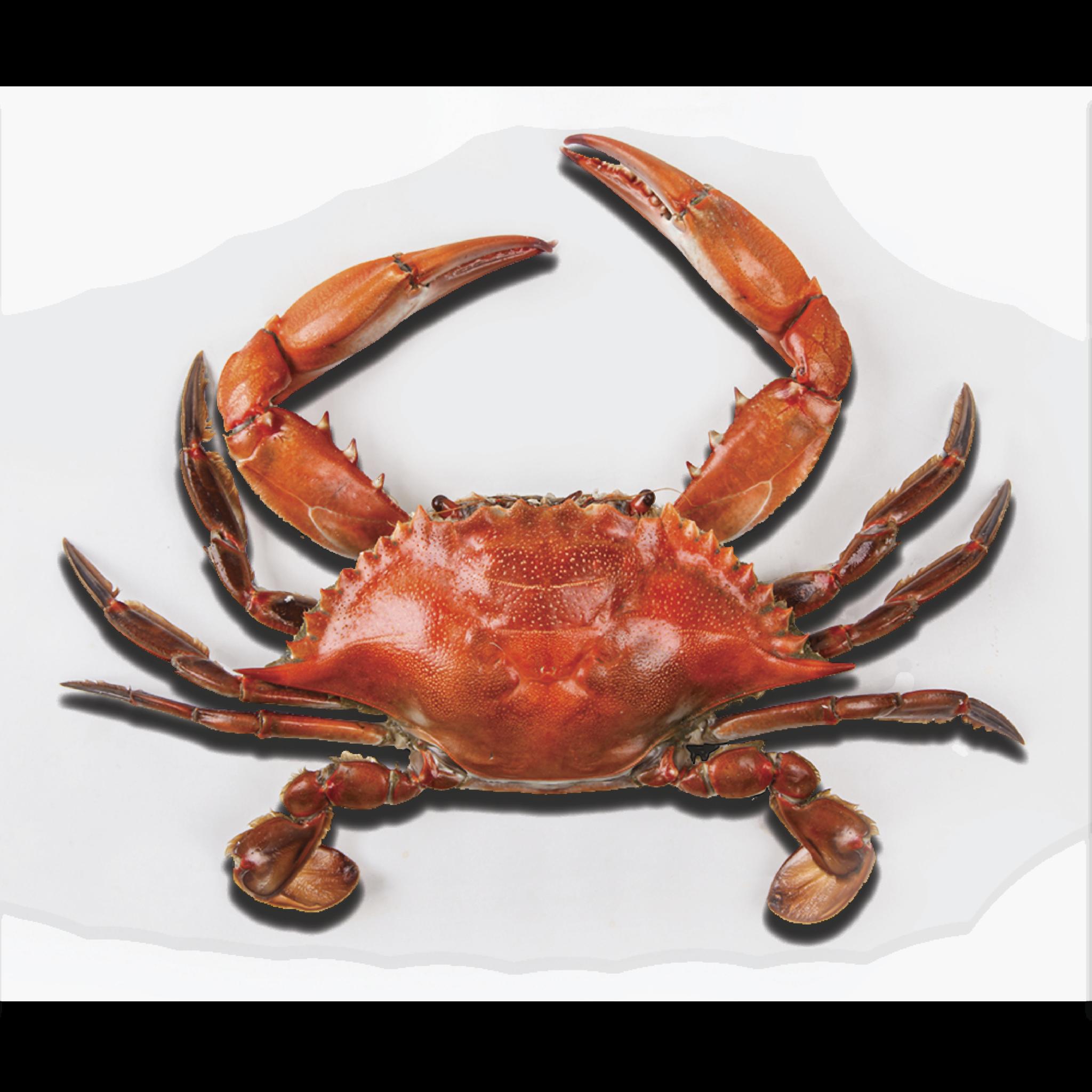 Crabs clipart chilli crab. Png images free dowbload