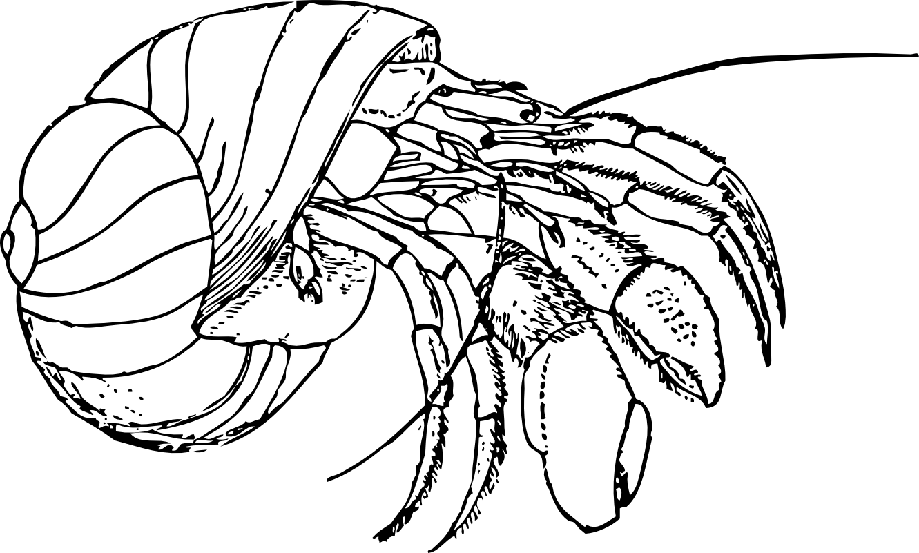 Crabs clipart coconut crab. Hermit coloring pages free