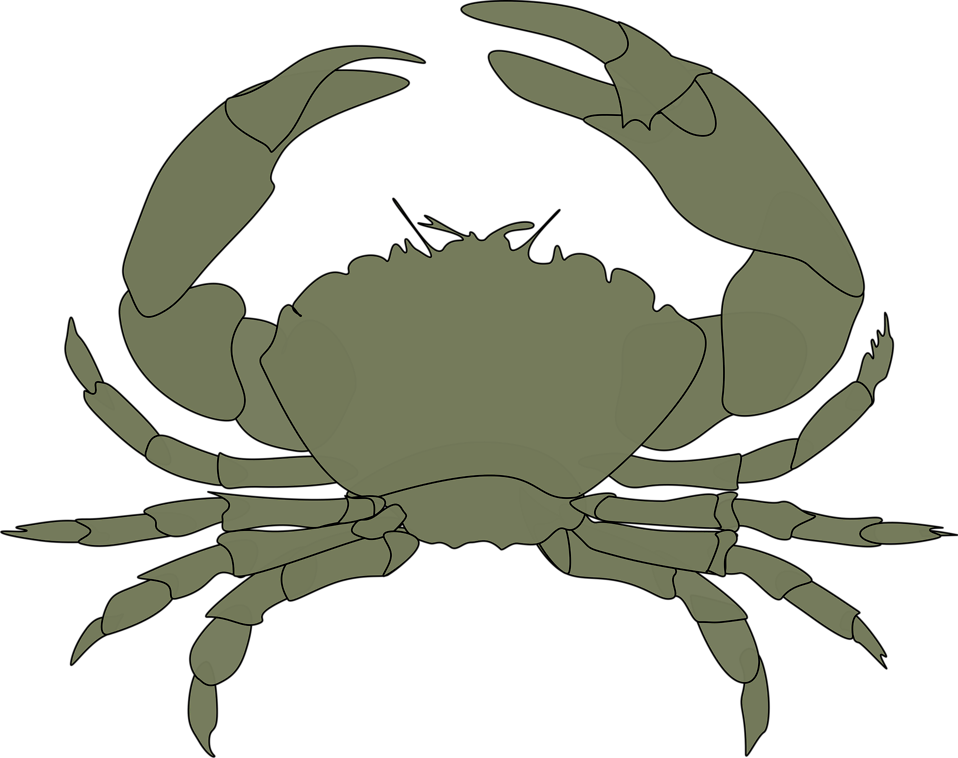 Collection of red cliparts. Crab clipart sea creature