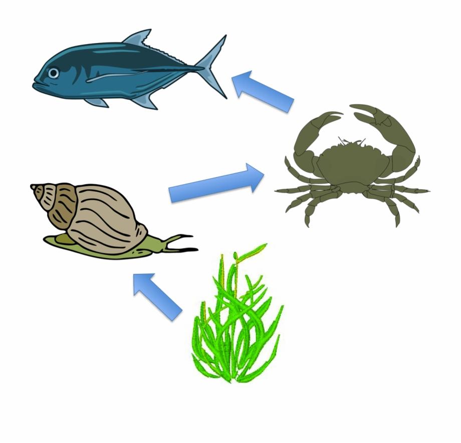 Snail food chain hd. Crab clipart sea creature
