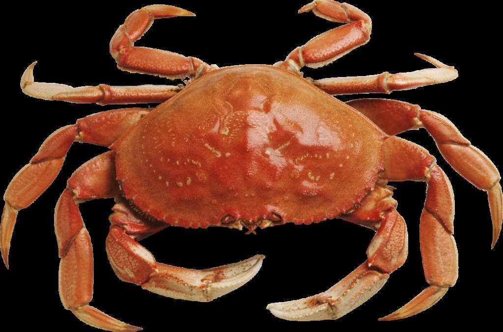 Crabs clipart vector. Crab png photos peoplepng