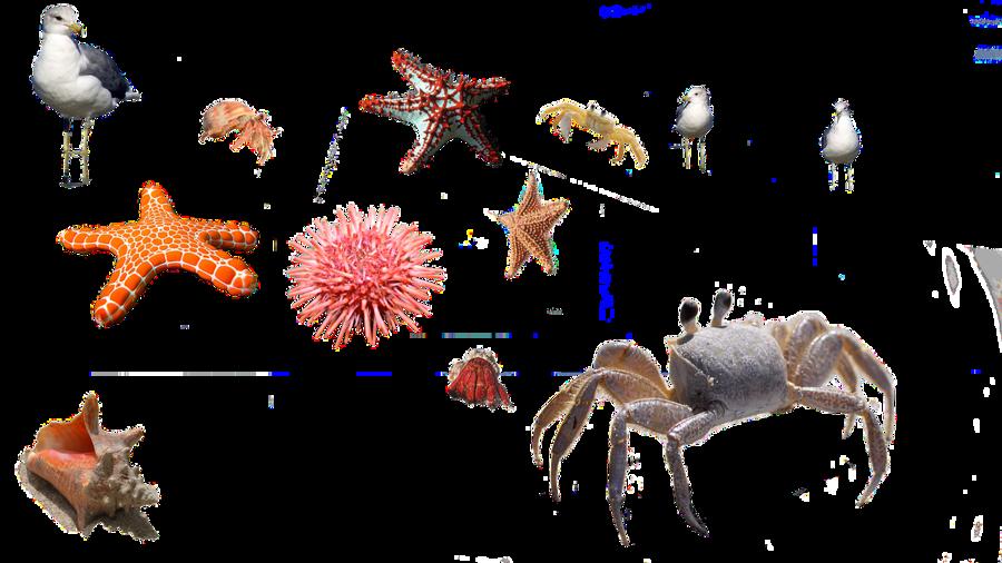 Cartoon illustration . Crab clipart starfish