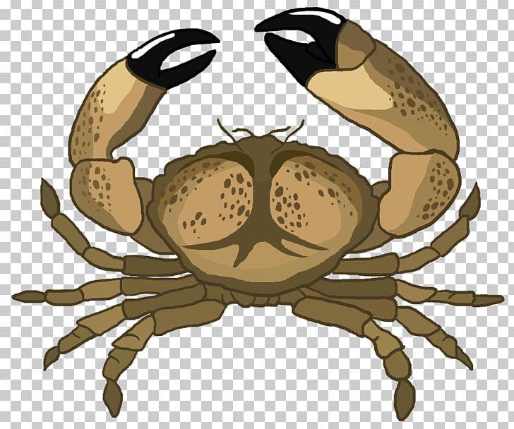 Crab clipart stone crab. Florida chesapeake blue strawberry