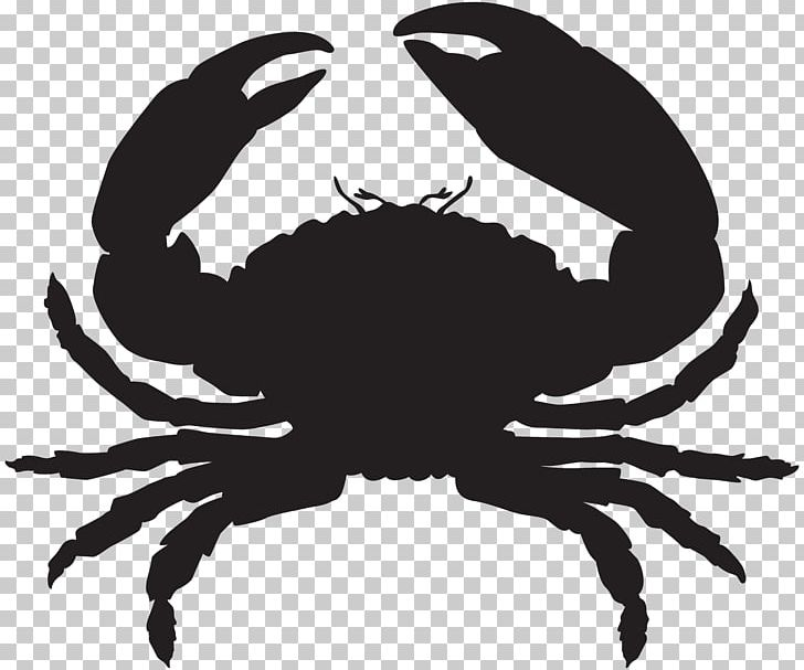 Florida seafood oyster lobster. Crab clipart stone crab