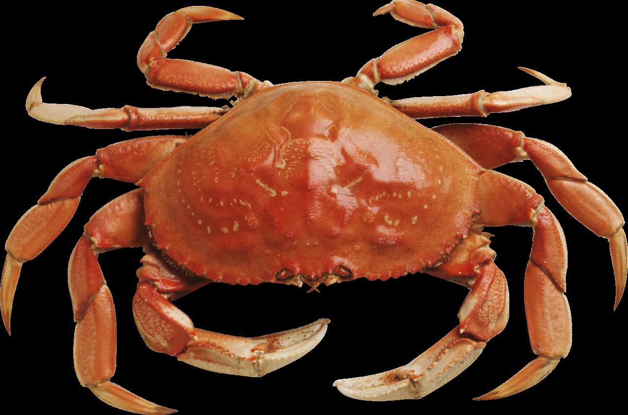 Seafood crab leg