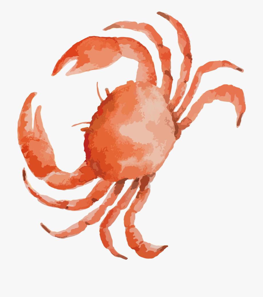 Seafood clipart crab leg. Drawing clip art black