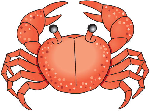 Crab clipart. Sea