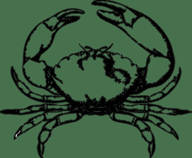 Crab clipart arthropoda. Frames illustrations hd images
