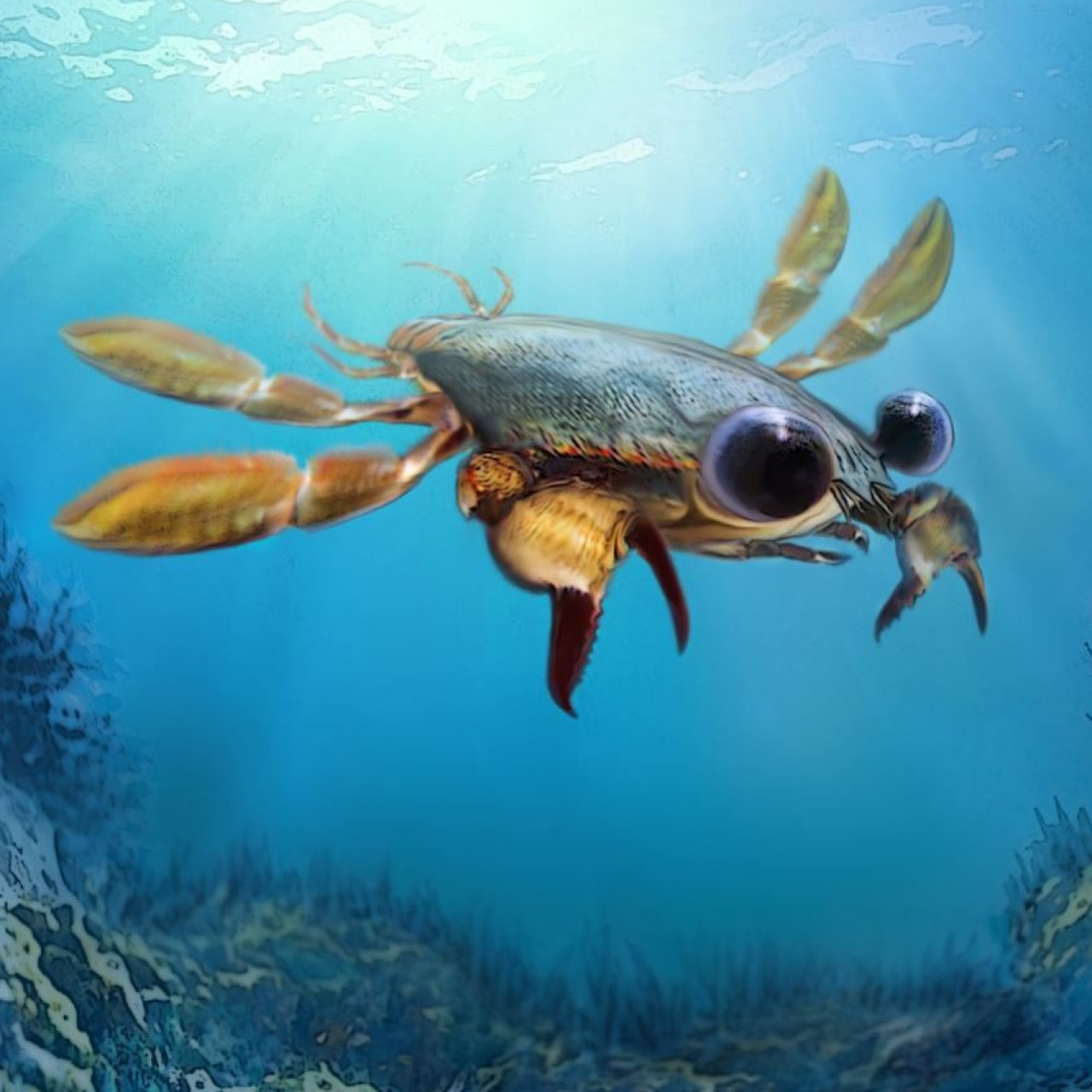 Nightmare crab with cartoon. Crabs clipart big eyed