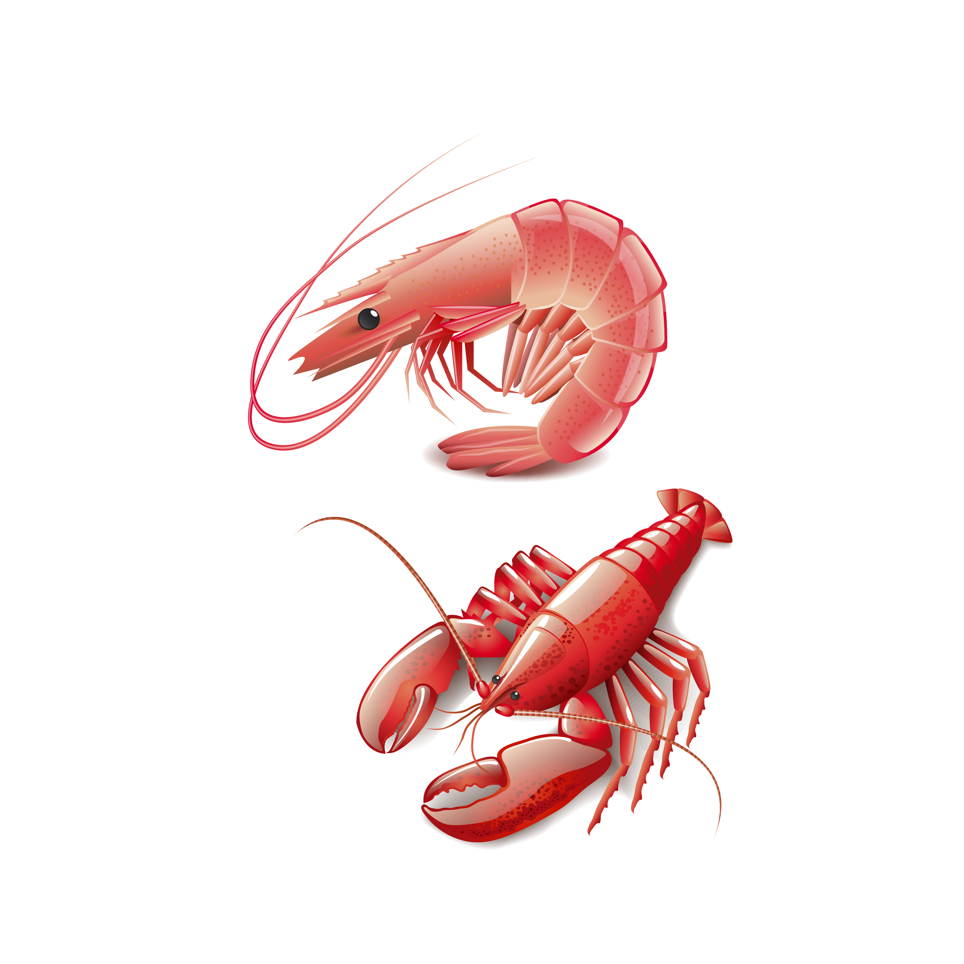 Lobster clipart cooked. Seafood homarus cooking red