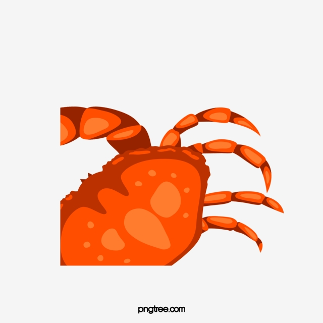Crabs clipart crab leg. Legs hairy png
