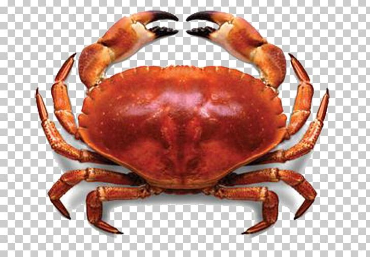 Meat lobster seafood fresh. Crabs clipart crab stick