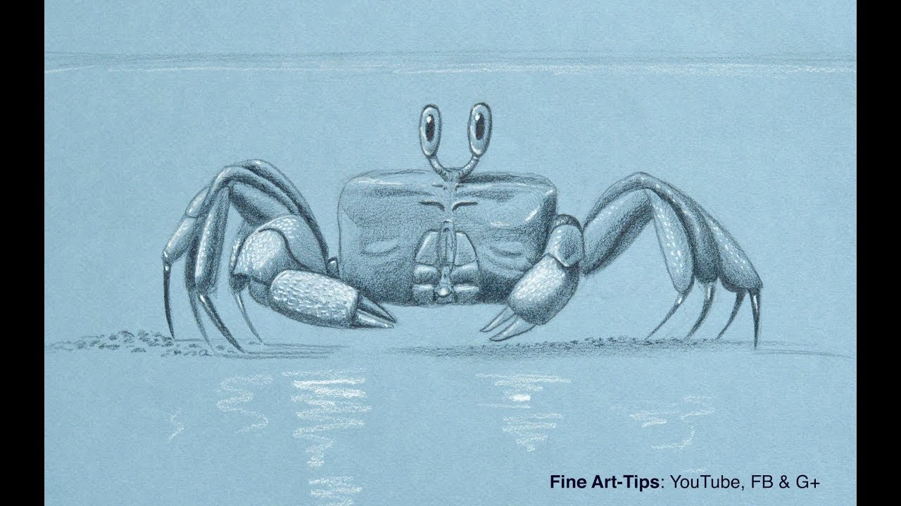 How to draw a. Crabs clipart ghost crab