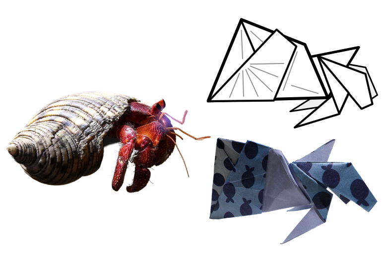 Shell clipart shell hermit crab. Hermitcrabliggend png