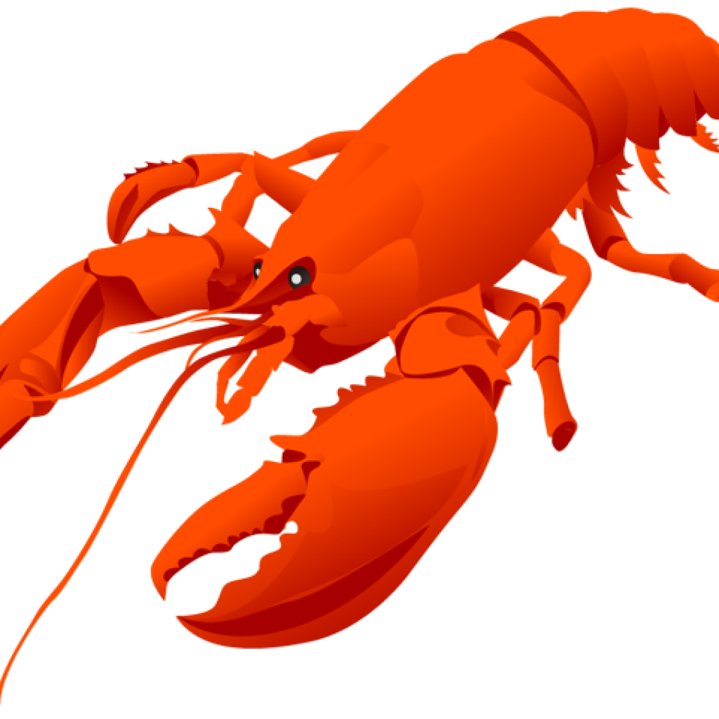 At getdrawings com free. Lobster clipart drawn