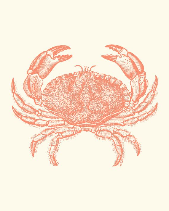 Crabs clipart pink crab. Coral baltimore steamed art