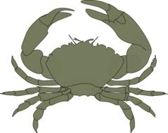 Crabs clipart red whale. Cute crab free image
