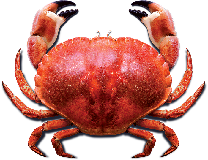 Crabs clipart transparent background. Crab png images free