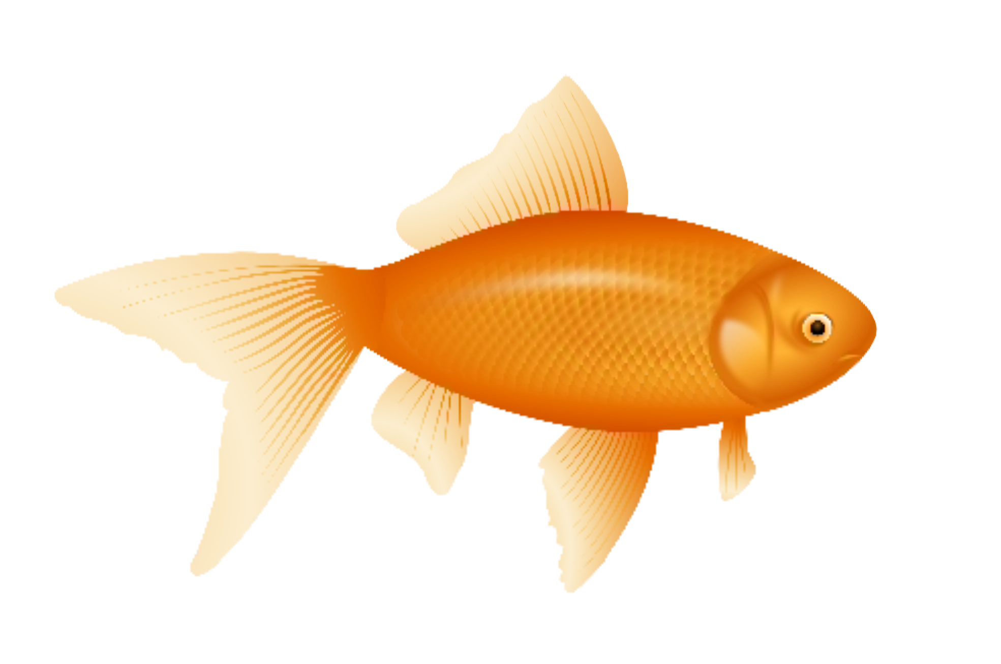 collection of transparent. Goldfish clipart fish cracker