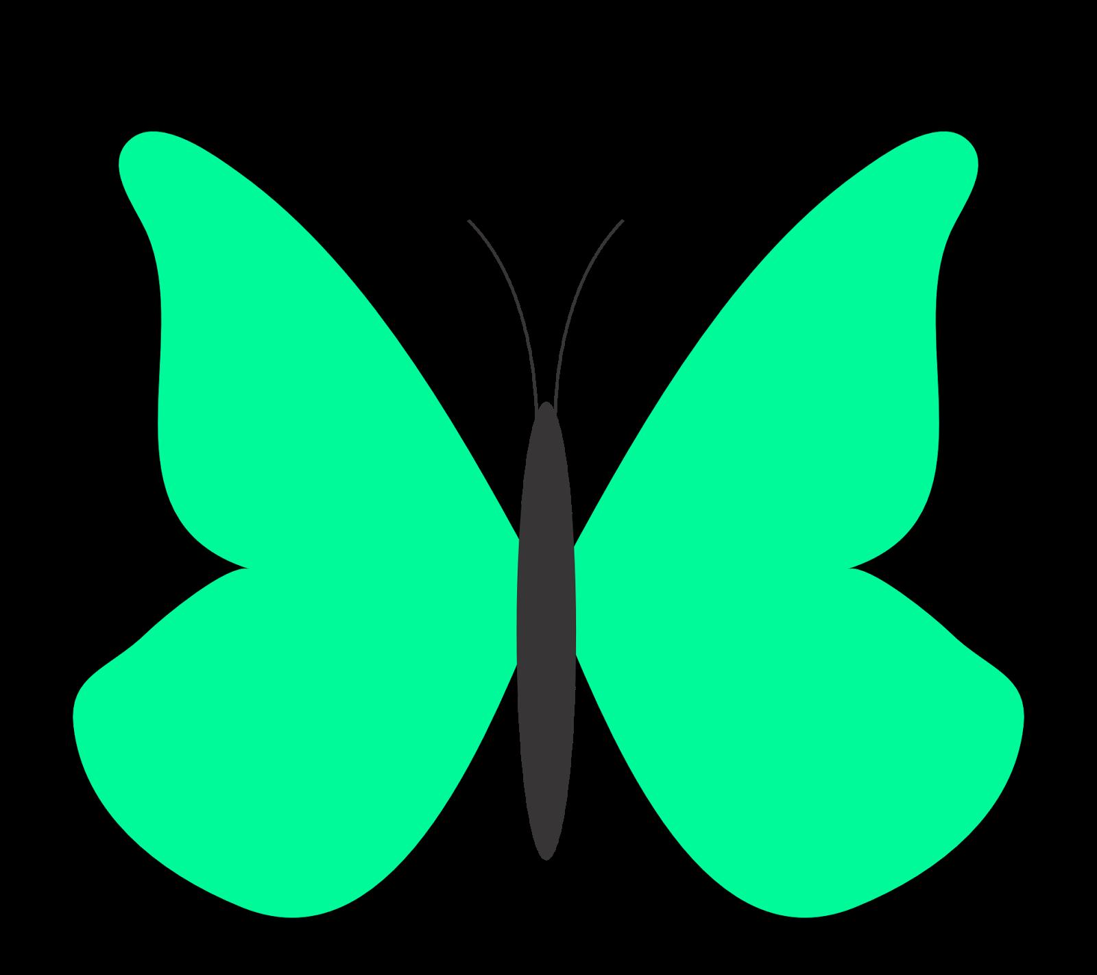 February butterfly