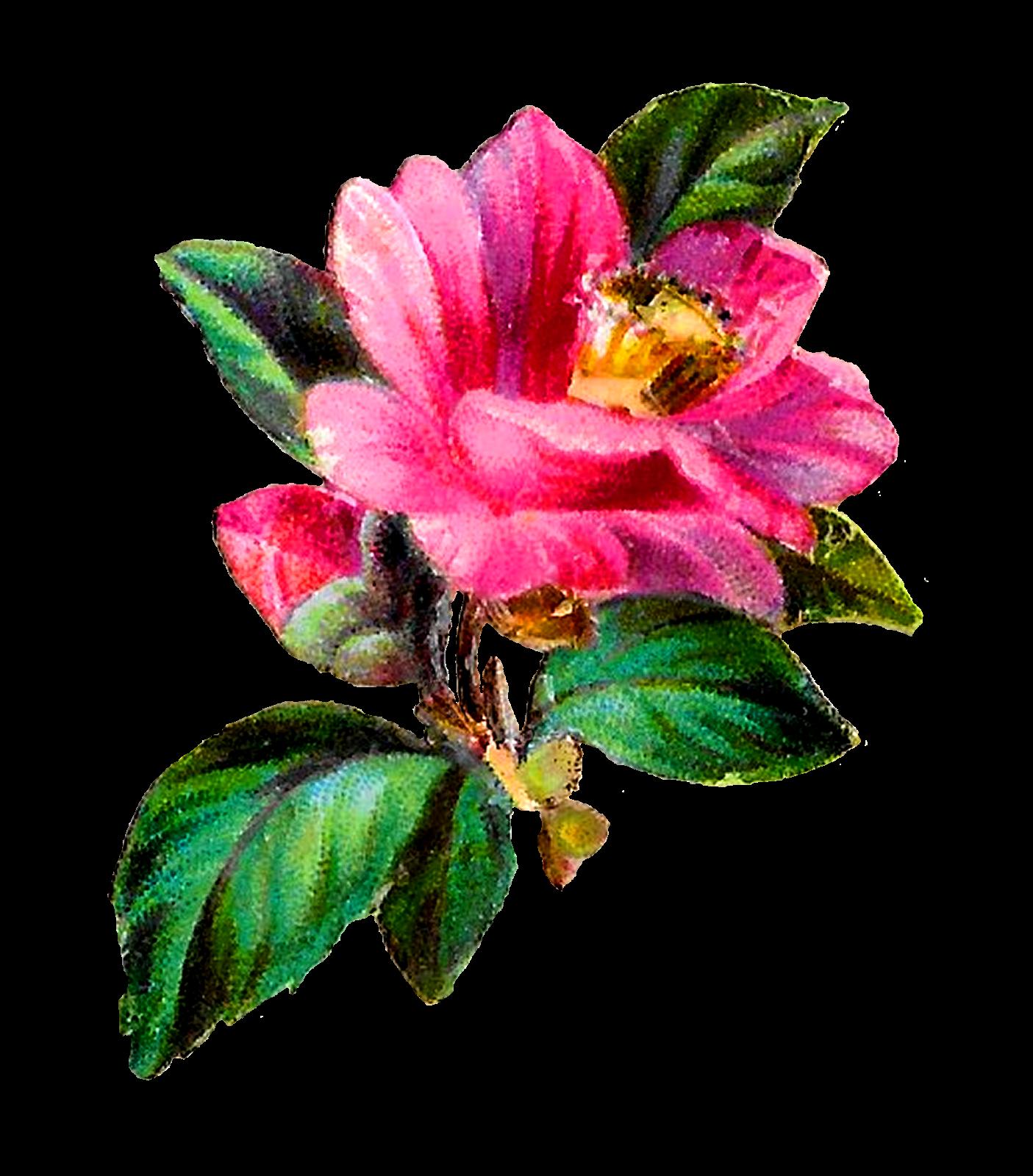 Craft clipart flower. Antique images transfer pink