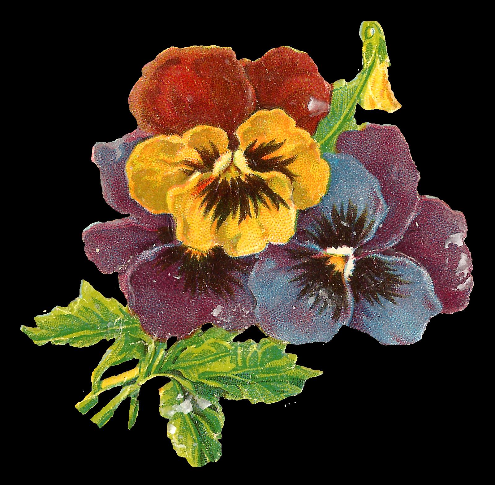Antique images wildflower art. Craft clipart flower