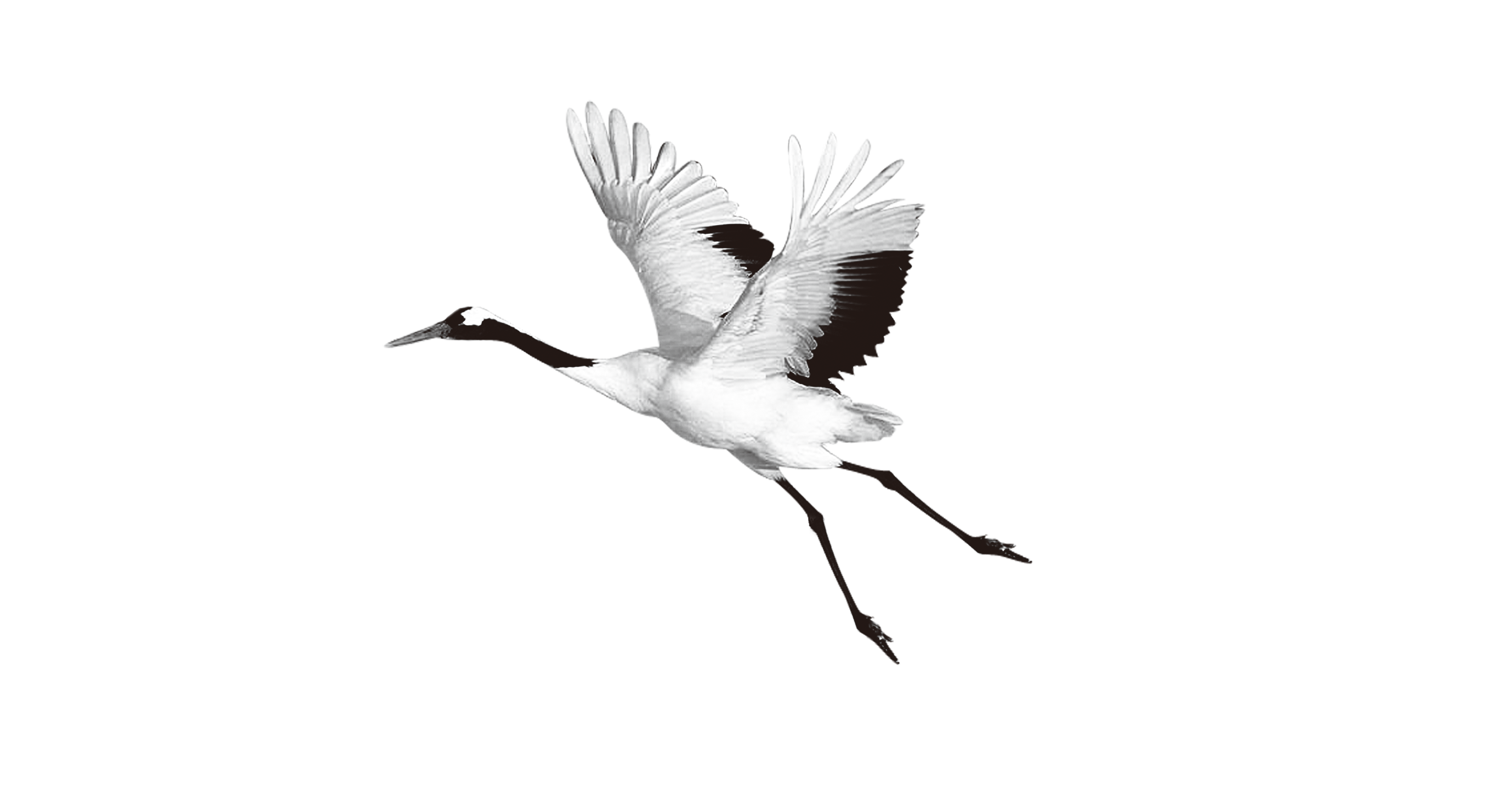 Crane clipart animal. Zhalong nature reserve red