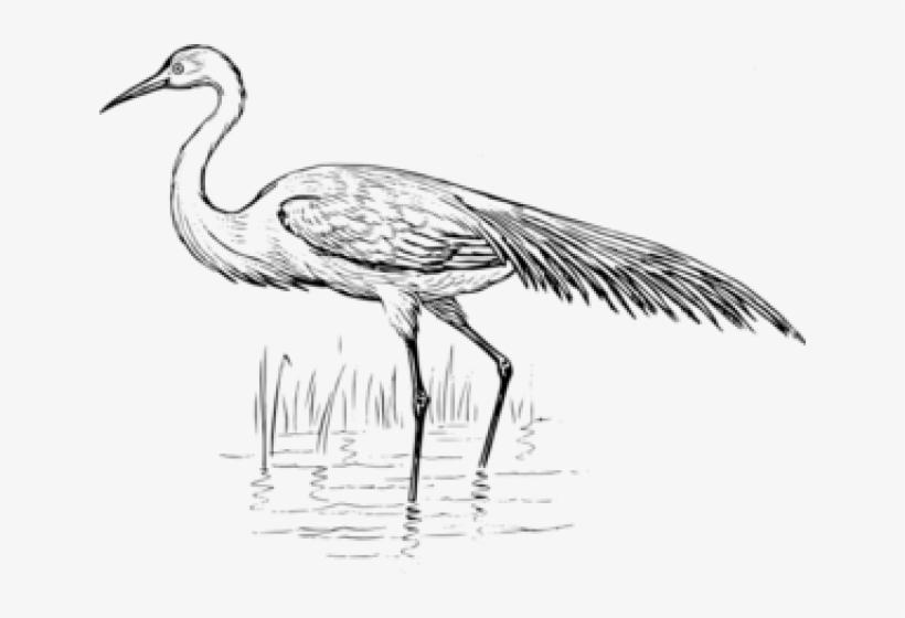 Egret bird black and. Crane clipart blue crane