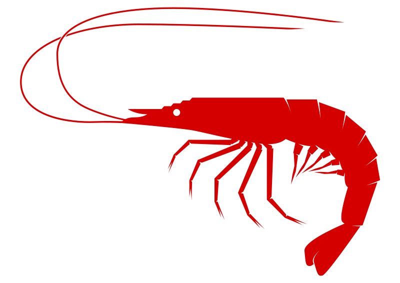 collection of shrimp. Lobster clipart simple