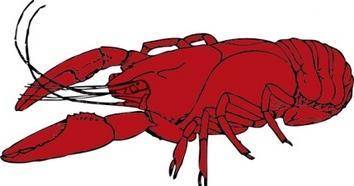 clipartlook. Crawfish clipart clip art
