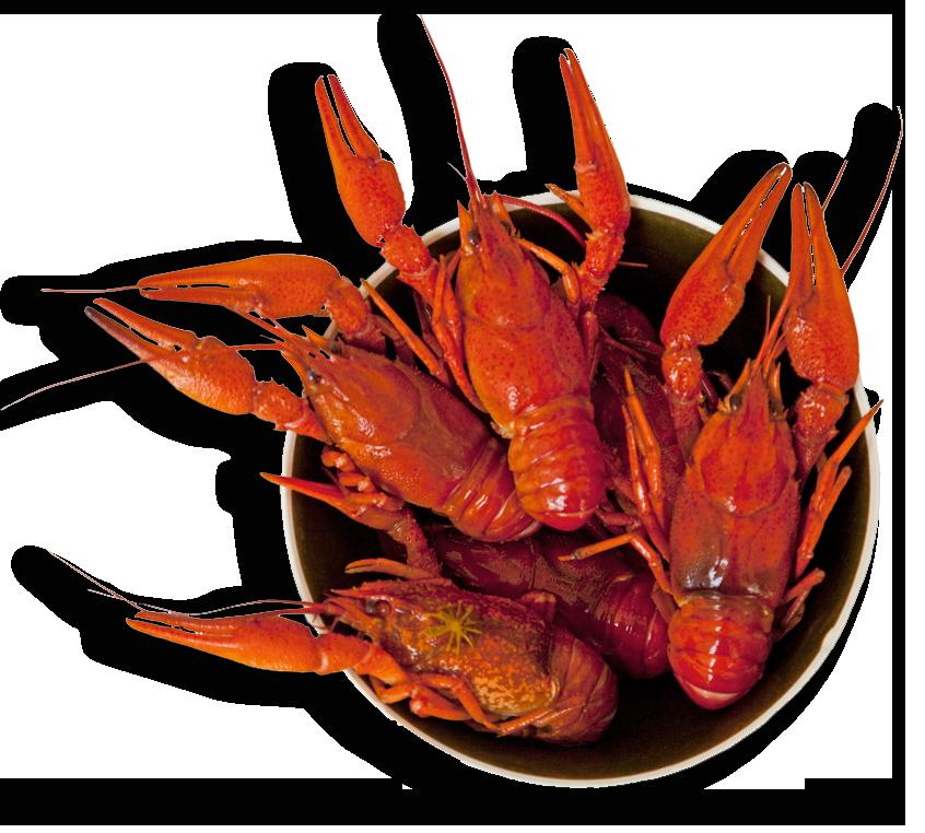 Allen parish taste the. Crawfish clipart culture louisiana