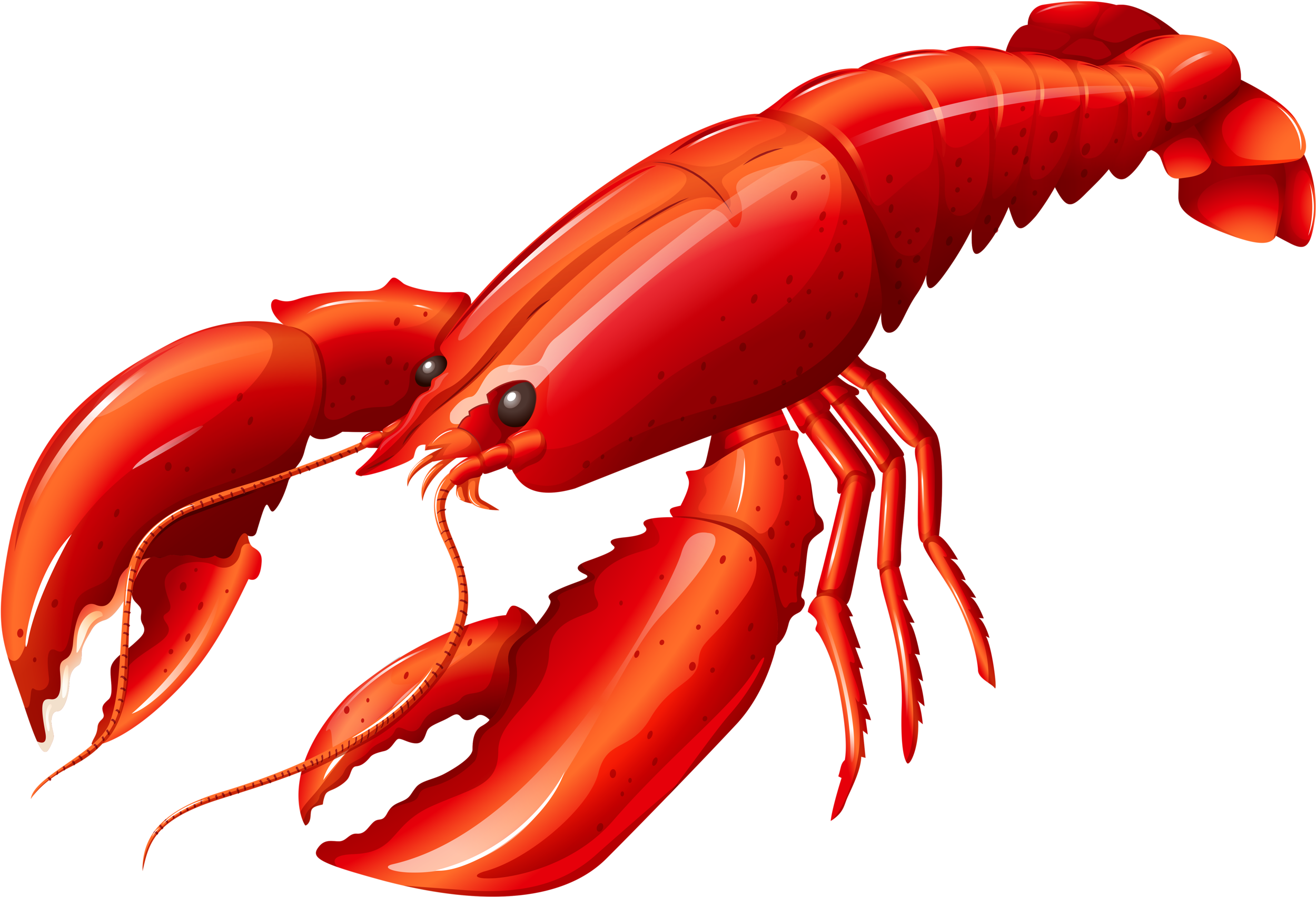 Hd chef hat different. Crawfish clipart transparent background