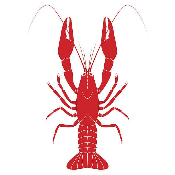 Red crayfish flat illustration. Crawfish clipart vector