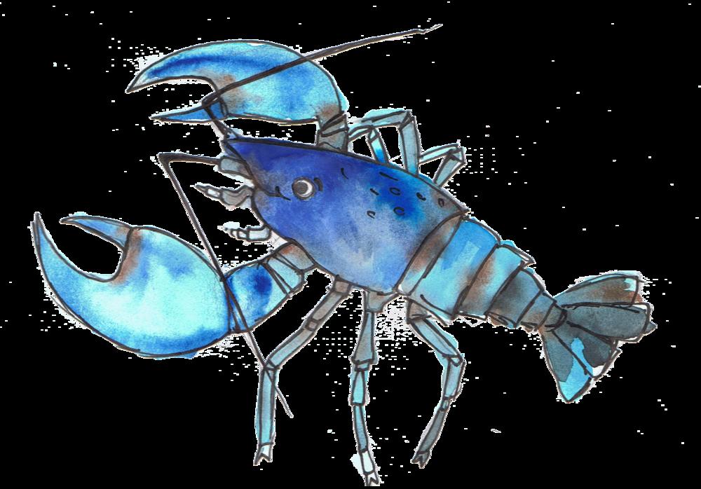 Crawfish clipart yabbie. Animal alphabet adventure pt
