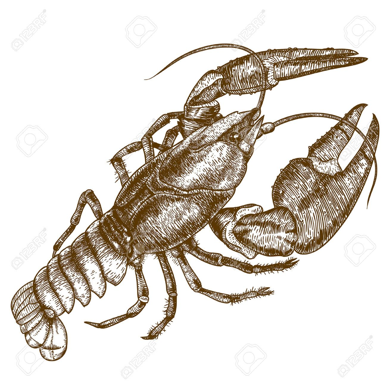Crawfish clipart yabbie. Stock illustrations cliparts and