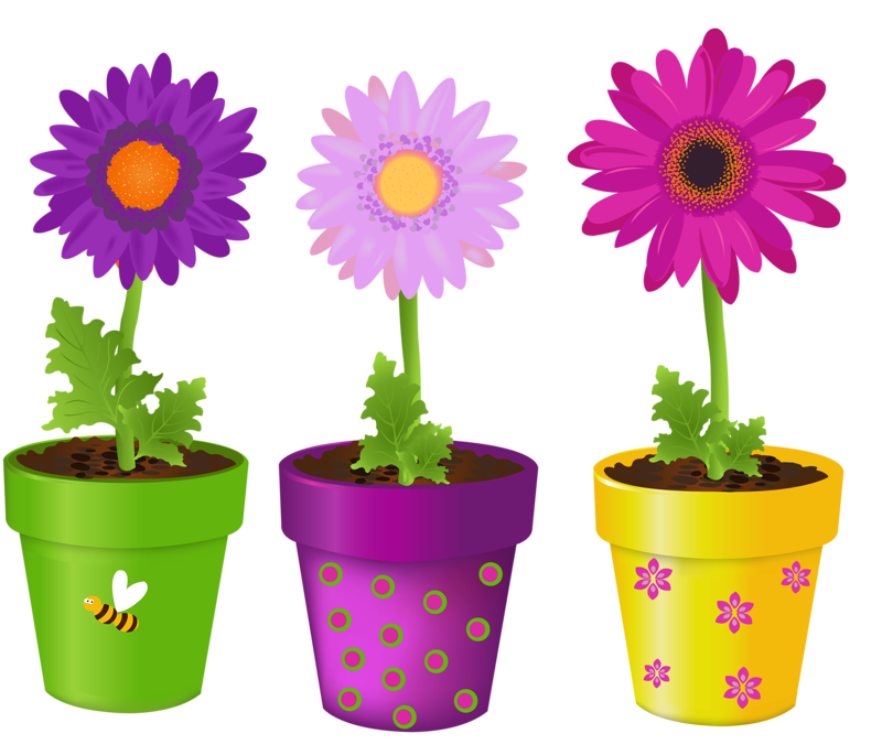 Picture my garden valley. Poppy clipart potplant